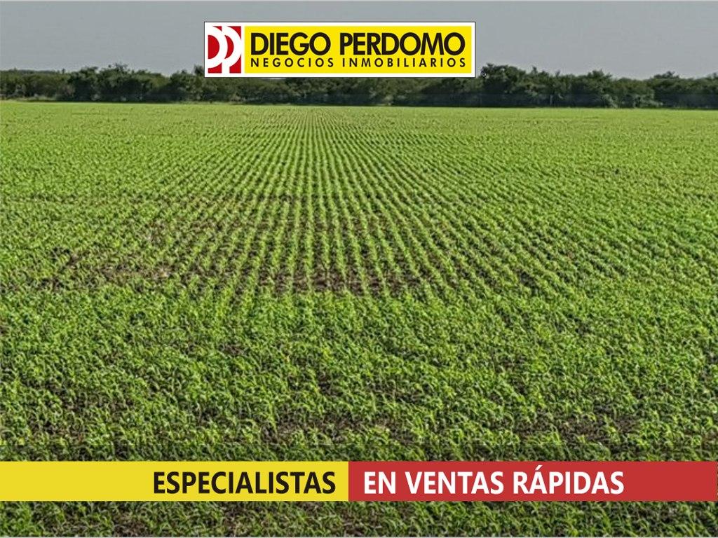 campo de 115 has en venta, san josé - uruguay