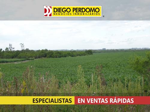 campo de 132 has en venta, san josé - uruguay