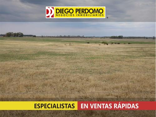 campo de 137 has en venta, san josé - uruguay
