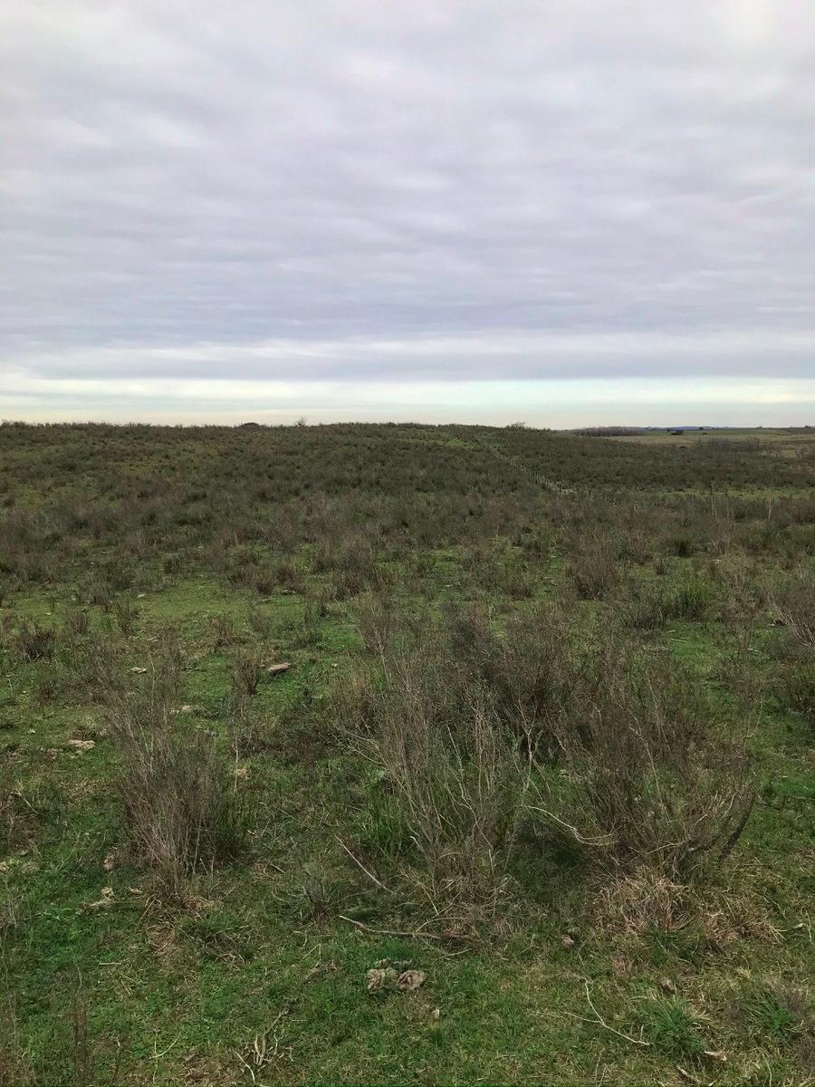 campo de 16 hectáreas, a 5 kms de ruta 81.