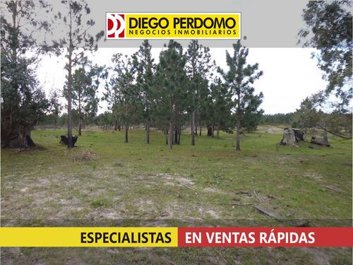 campo de 190 has en venta, san josé - uruguay
