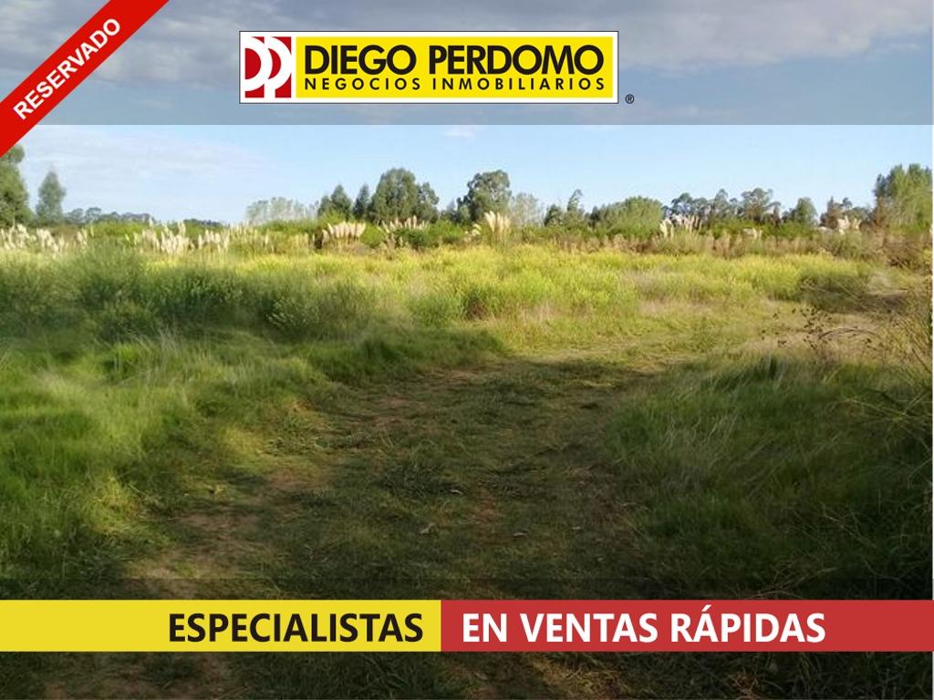 campo de 218 has en venta - san josé - uruguay