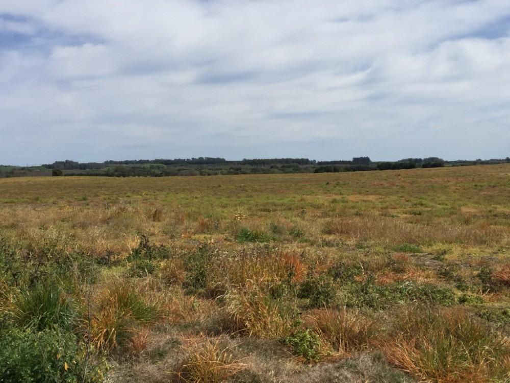 campo de 24 hás en venta a 3 km de puerto conchillas.