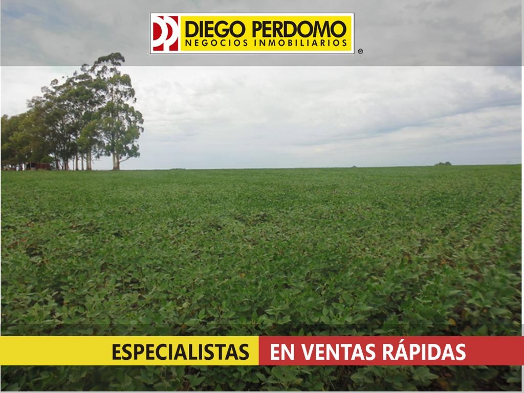 campo de 255 has en venta, san josé uruguay