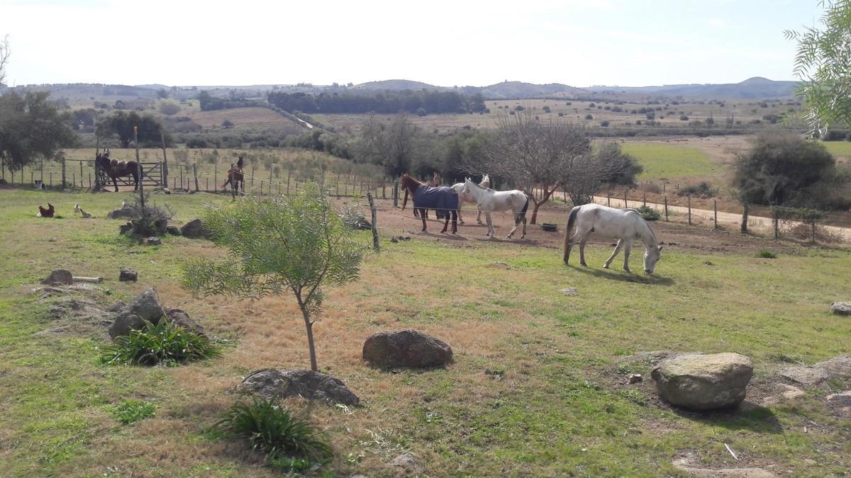 campo de 256 hectáreas con casa, galpón, aguada