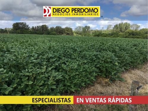 campo de 34 has en venta, san josé - uruguay