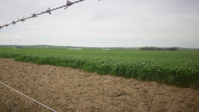 campo de 380 has en coronel pringles. 100 % agrícola - sobre ruta !