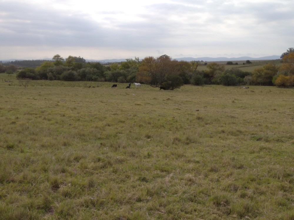 campo de 40 hectáreas con aguada