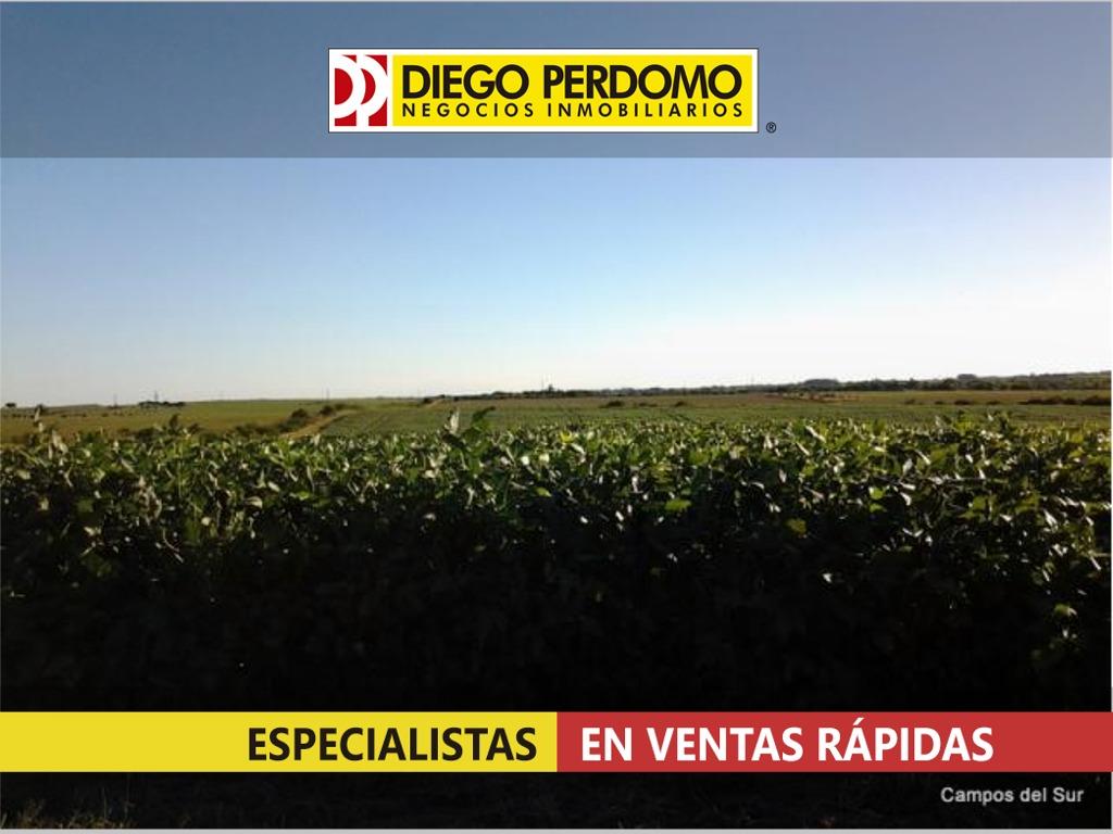 campo de 400 has en venta, san josé - uruguay
