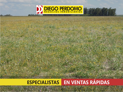 campo de 415 has en venta, flores - uruguay