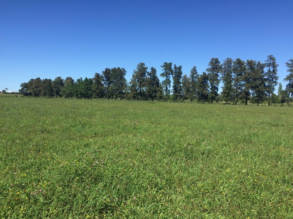 campo de 4,5has a la venta en chinchilla 5 km de atlantida