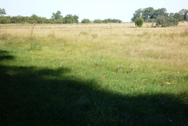 campo de 500 hectáreas