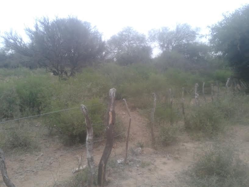 campo de 5.170 hectáreas ( serrezuela. cba )
