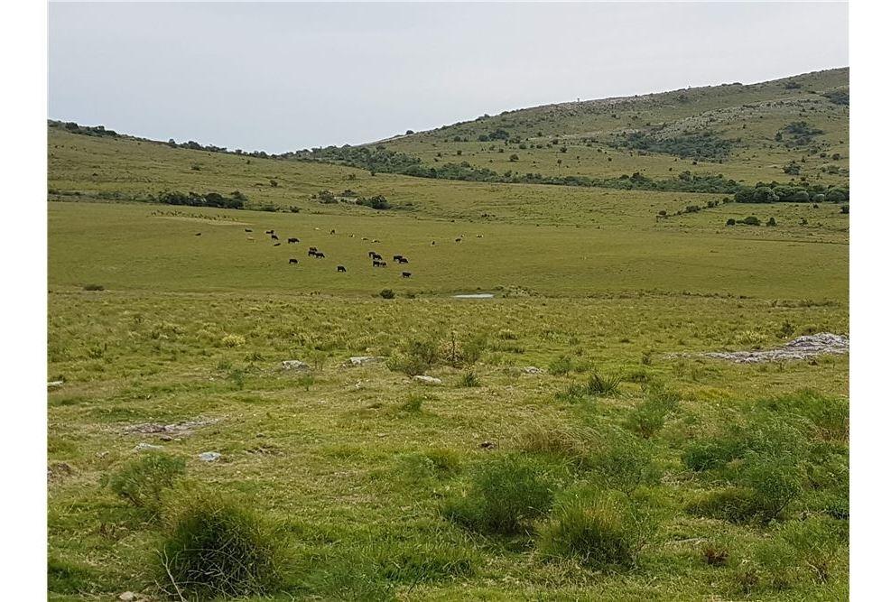 campo de 57 has, cerro los caracoles, san carlos