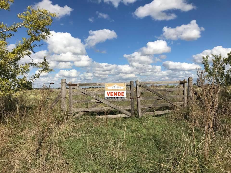 campo de 6 ha en gomez de la vega - coronel brandsen