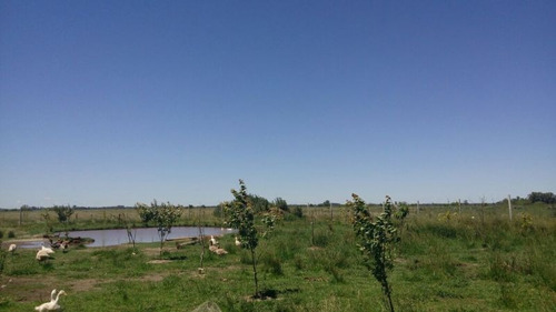 campo de 68 hectãreas en la plata en ruta 2 altura km 49.