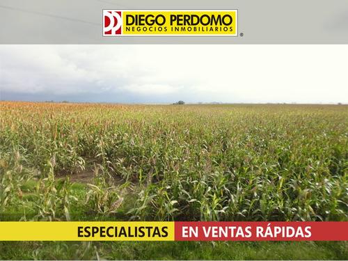 campo de 70 has en venta, san josé - uruguay