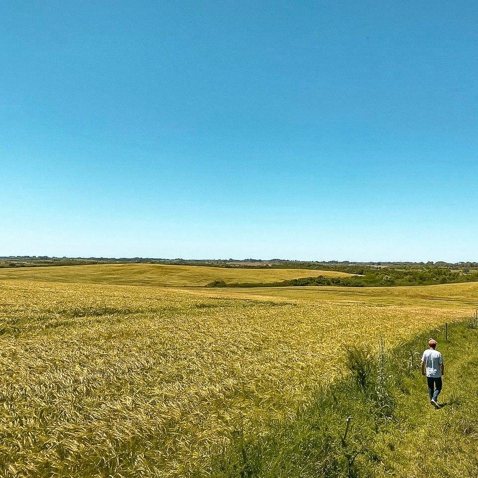 campo de 82 hectáreas en carmelo.