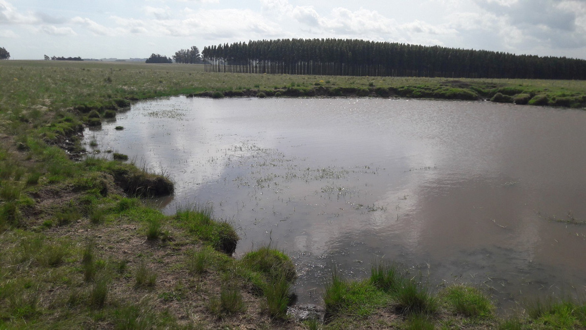 campo de 95 hectáreas sobre camino en lavalleja