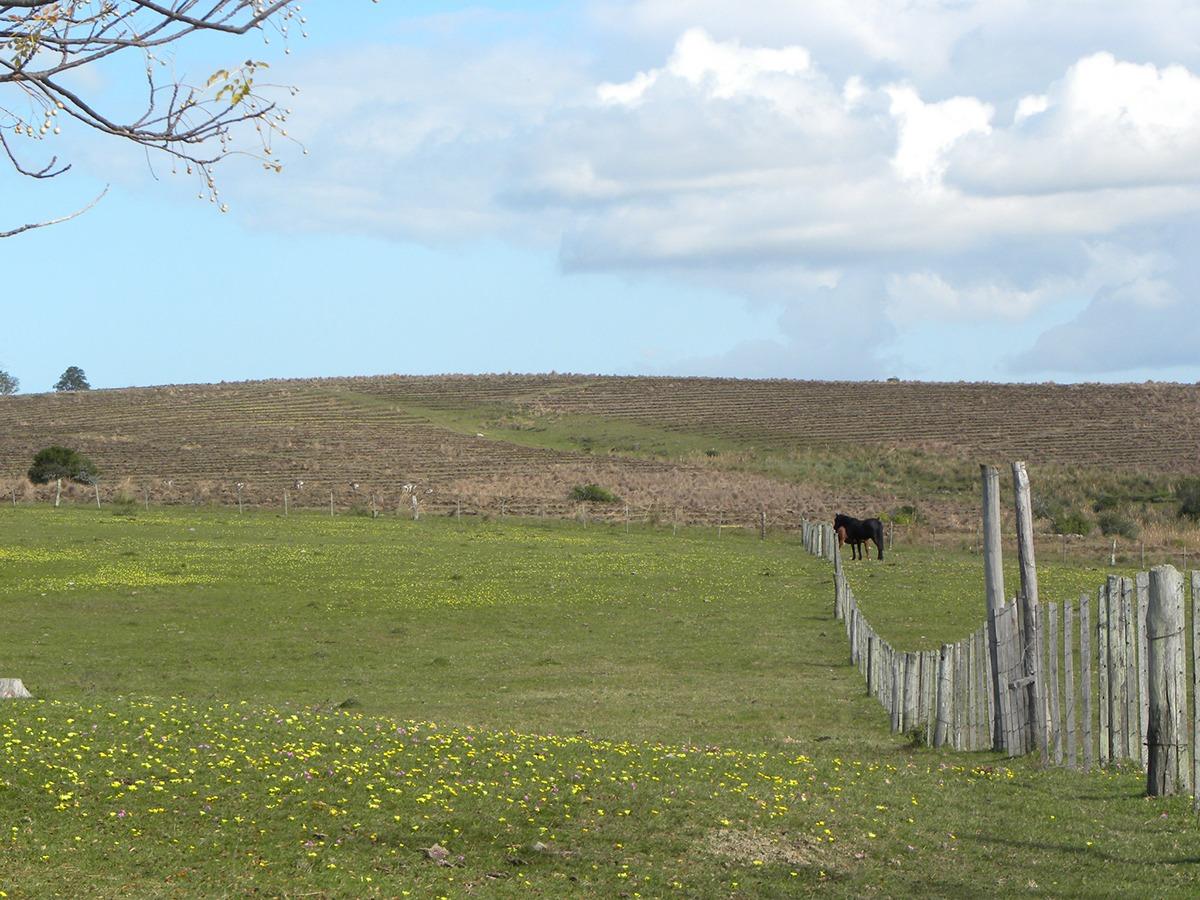 campo en cerro largo ref. 1488