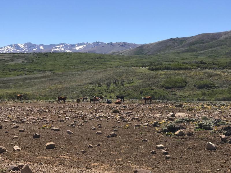 campo en cholila con rio interno- sobre ruta 15, a 2 km del lago mosquito
