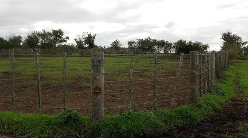 campo en gral. madariaga 680 has