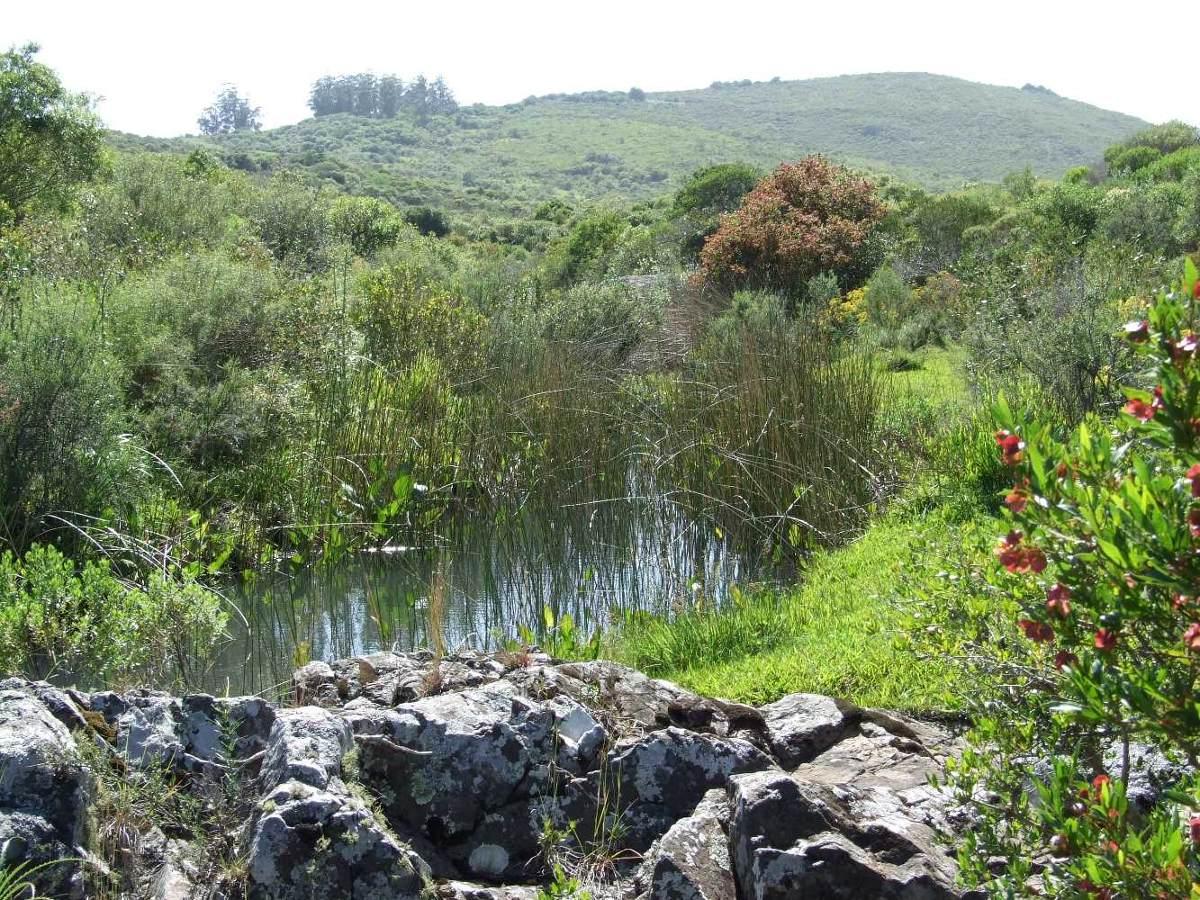 campo en lavalleja, arroyo, cerros y cerca del mar