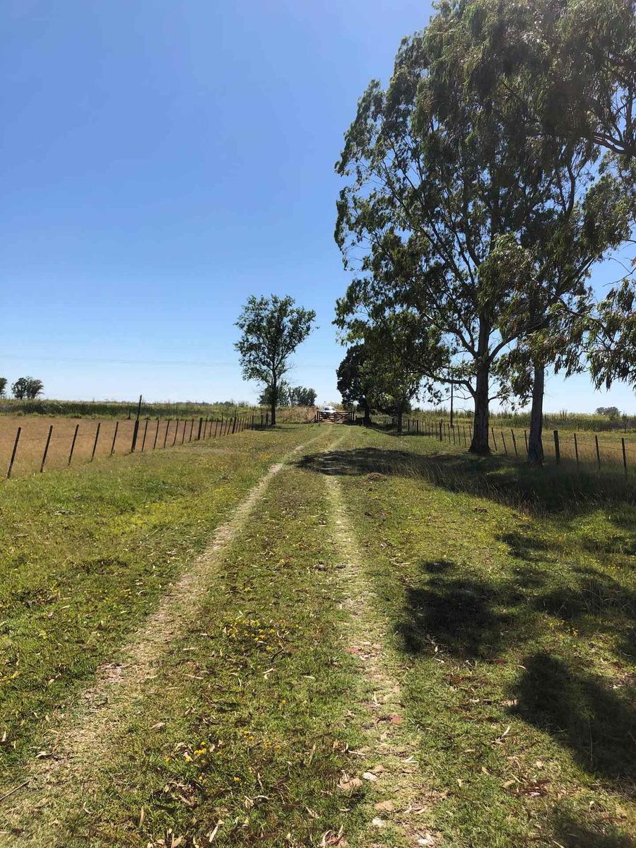 campo en rauch ganadero 175 hectáreas
