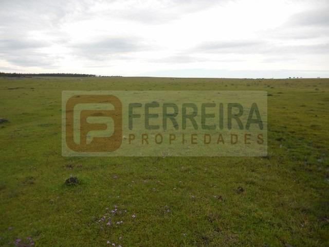 campo en venta de 73 hectáreas - arrayan - florida