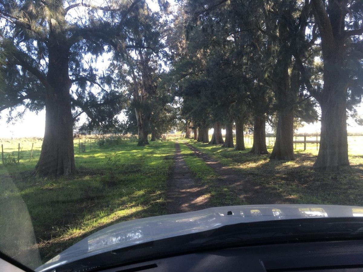 campo en venta en arditti | ruta 11 km 57 (110 has.)