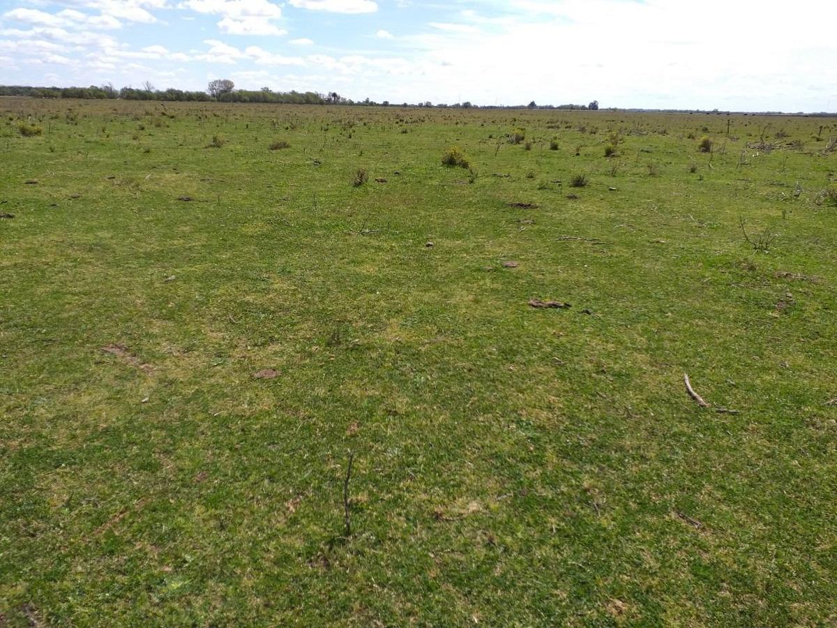 campo en venta en dolores - 122 hectáreas