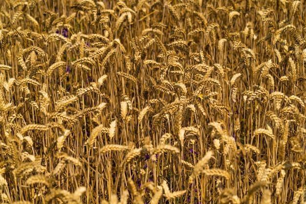 campo en venta en monte maiz córdoba oportunidad