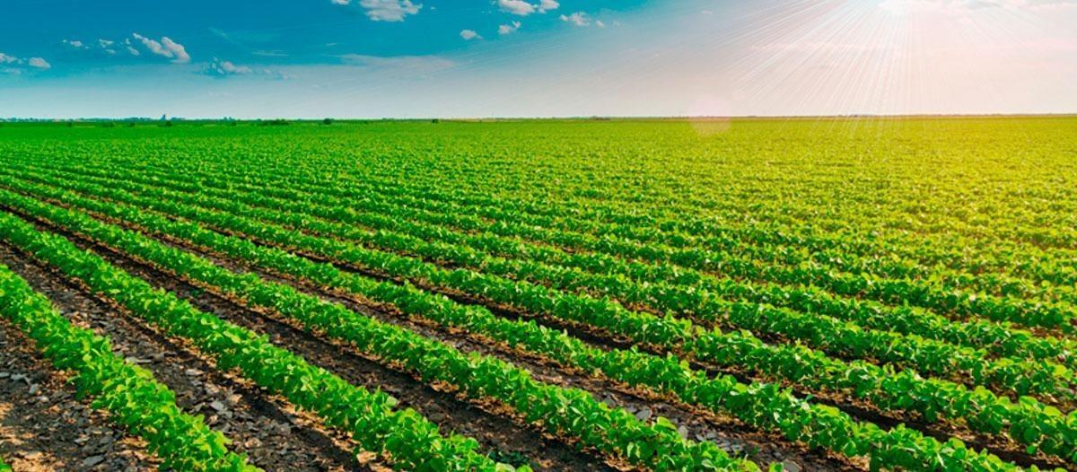 campo en venta en oliva córdoba oportunidad