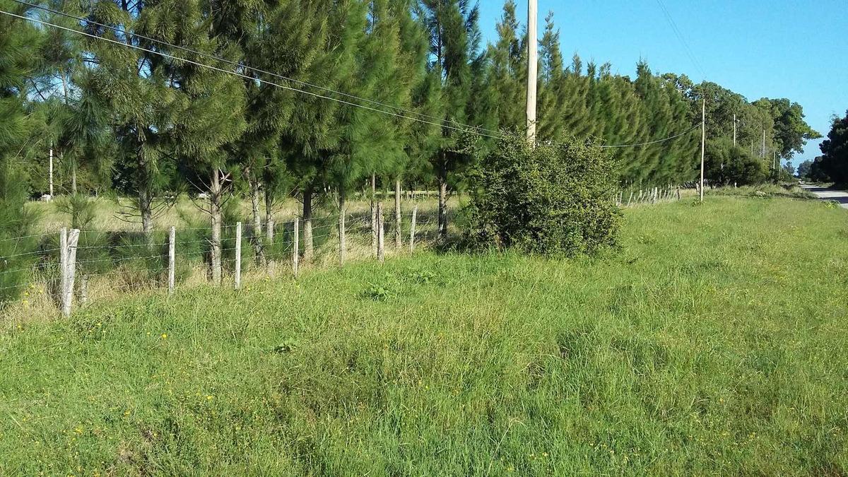 campo en venta punta indio 2,8 hectáreas con casa