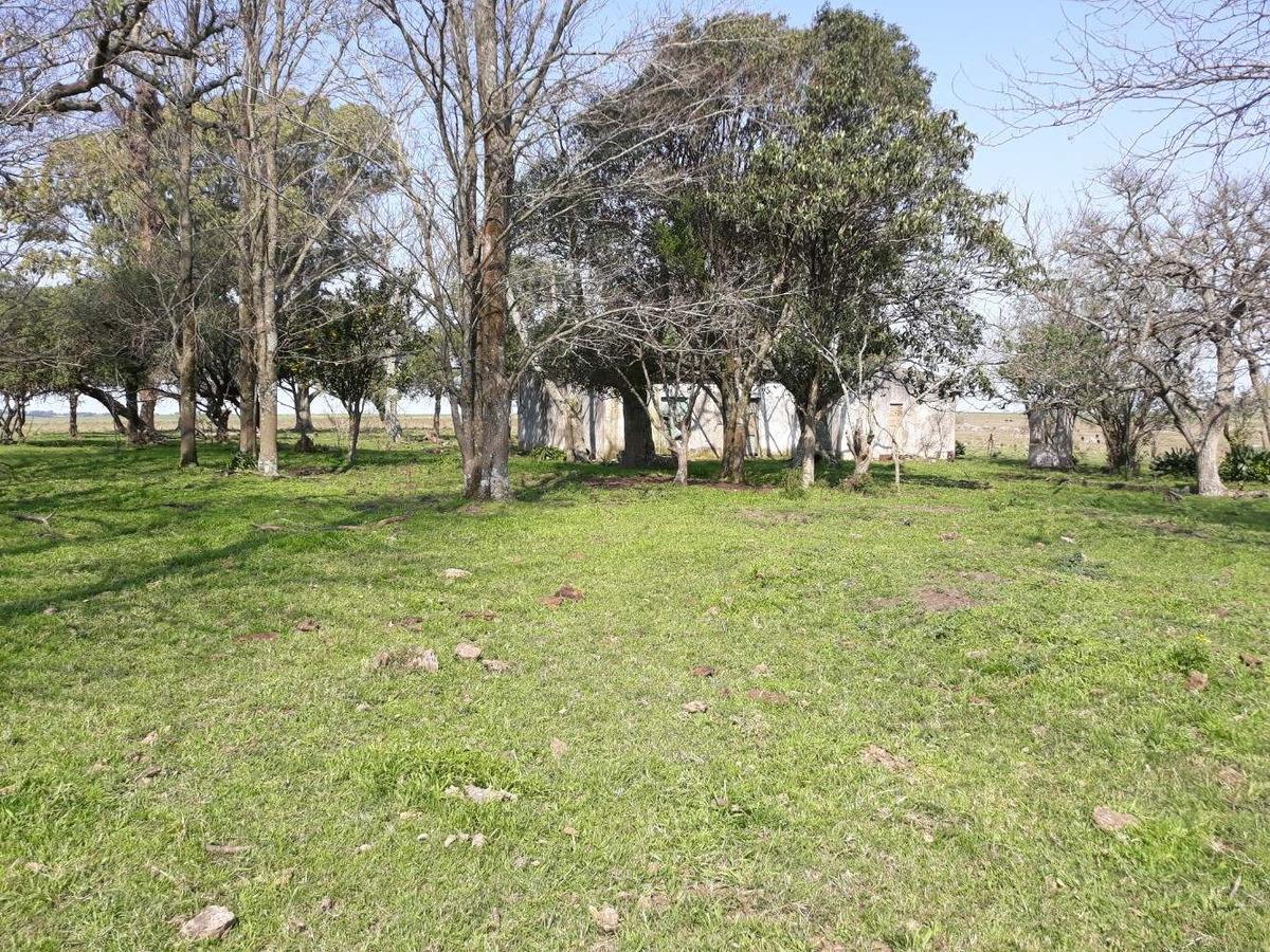 campo flores 55 has venta cerca ruta nacional 23 us 3.500 ha