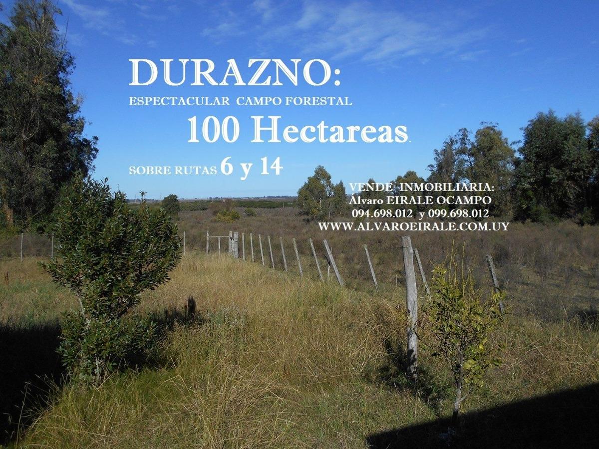 campo forestal 100 hectareas sobre ruta 14 y ruta 6