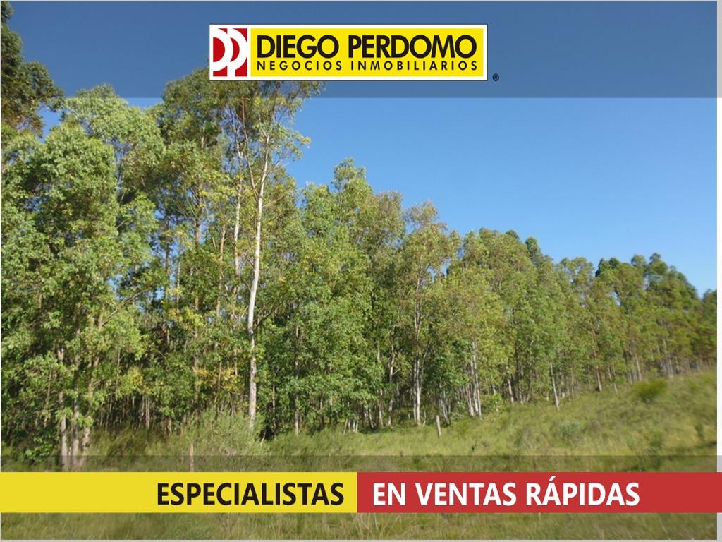 campo forestal, de 117 has en venta, san josé - uruguay