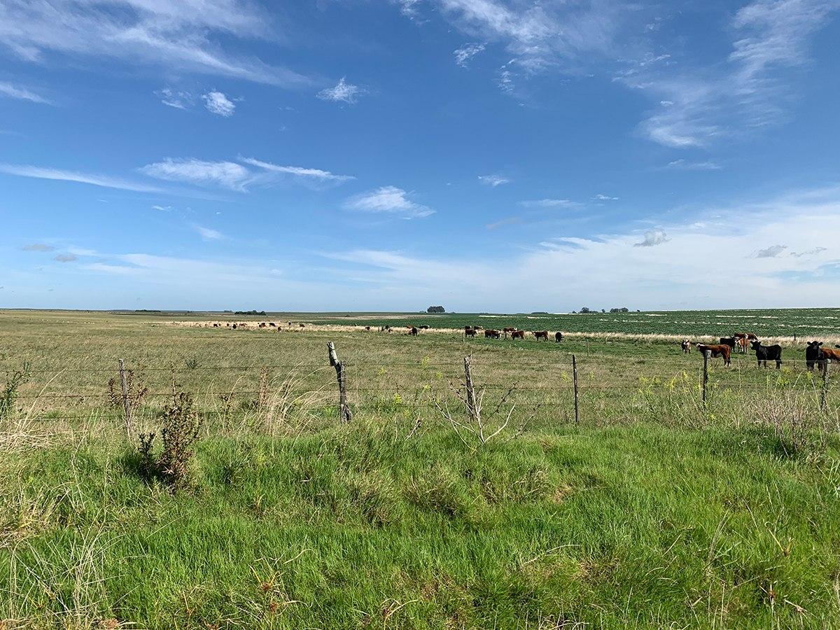 campo ganadero- agrícola en paysandú ref.: 2562