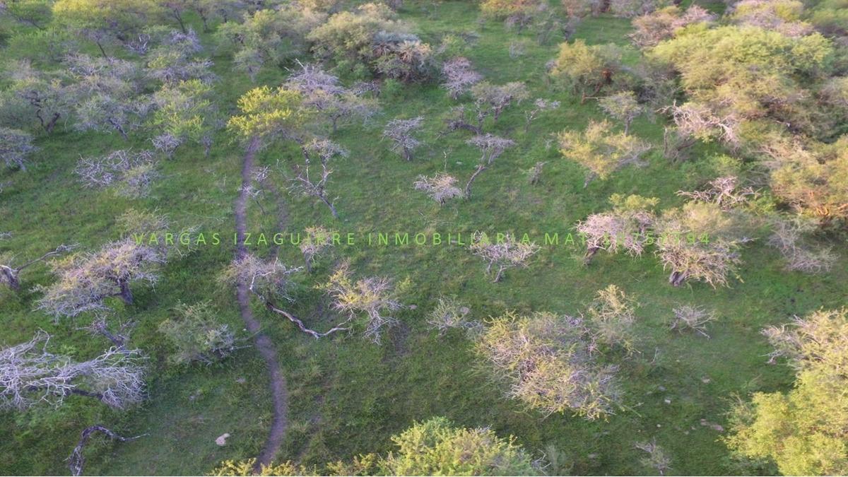 campo ganadero bovril entre rios 89 ha sobre ruta