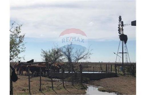 campo ganadero de 67has en san carlos centro