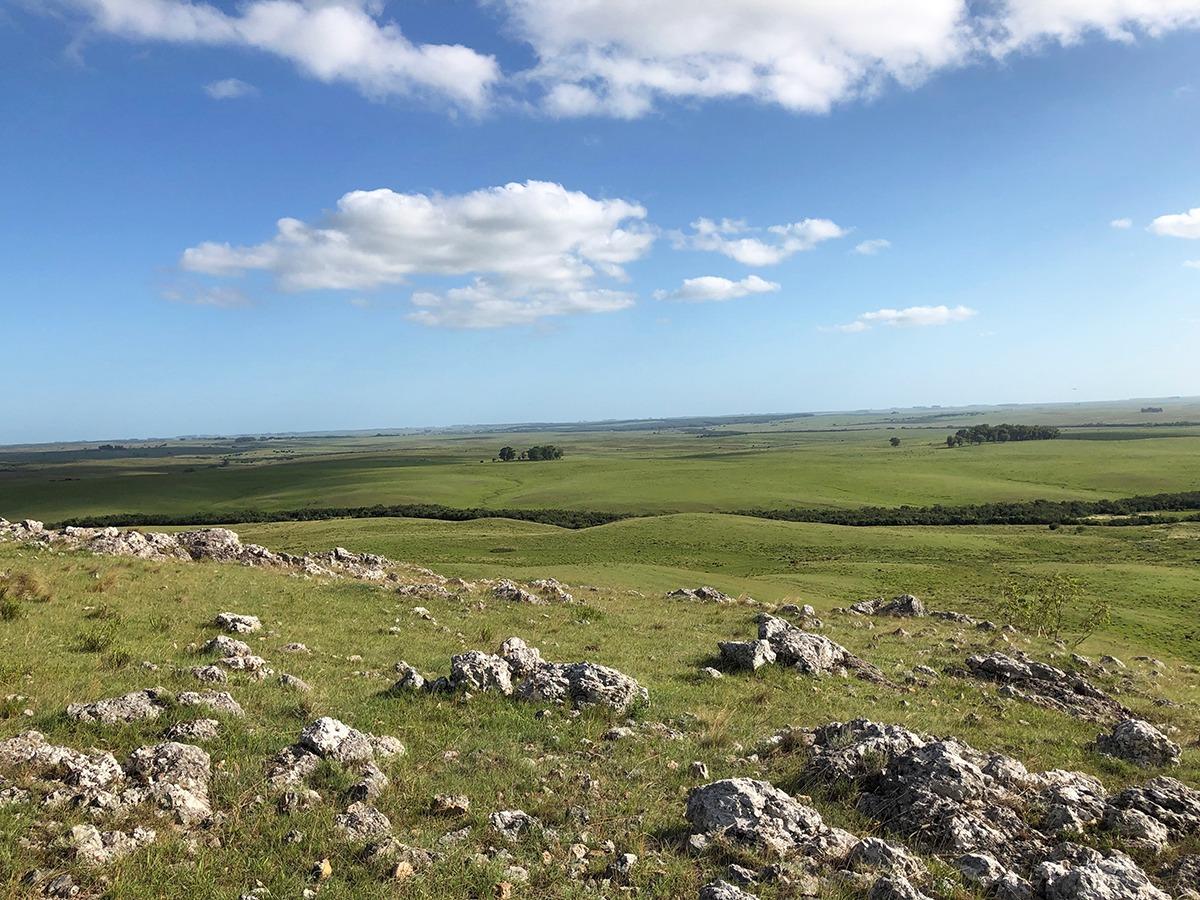 campo ganadero en venta en cerro largo ref: 5358