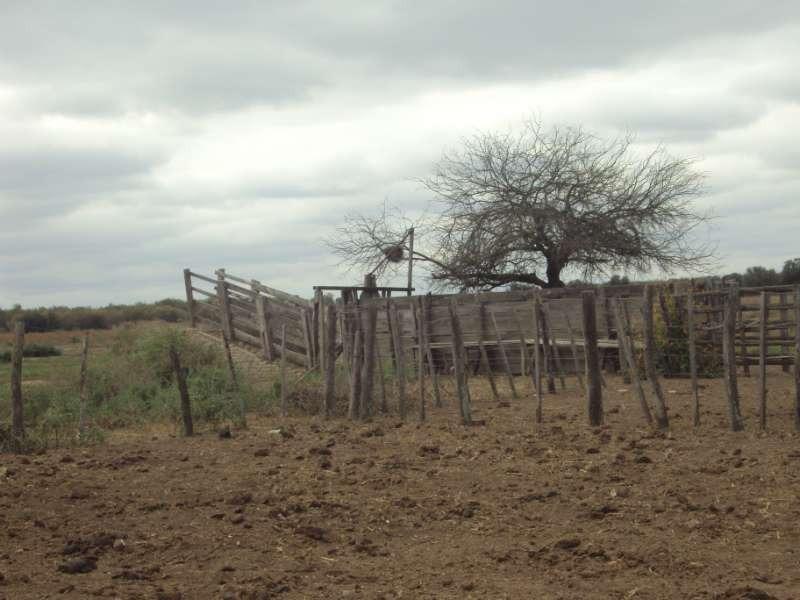 campo ganadero en venta en santiago del estero