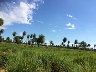campo ganadero en zona de roboré santa cruz de la sierra