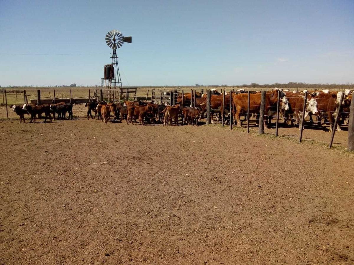 campo ganadero .galvez santa fe. en producción. 200 agricola