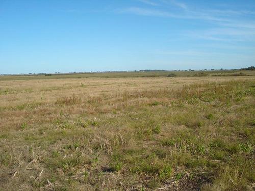 campo - general campos