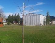 campo - ignacio correas arana