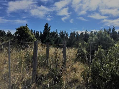 campo - los cipreses