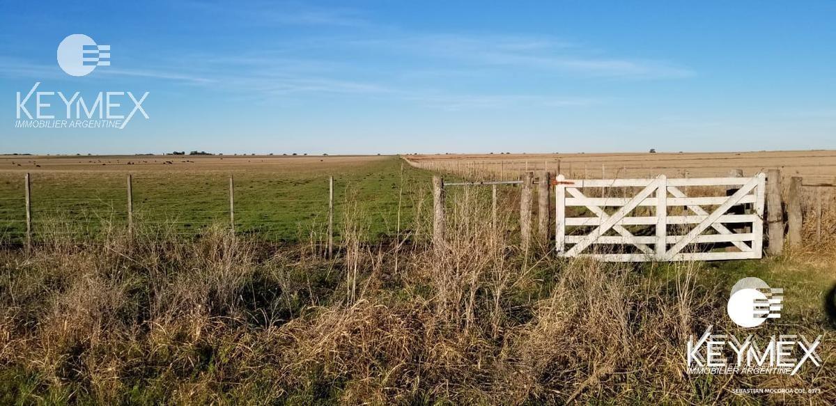 campo mixto agricola ganadero. la pampa macachin