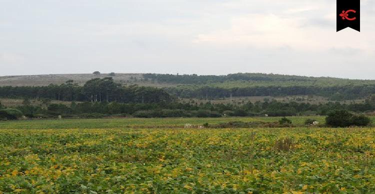 campo mixto en venta en canelones. ref. 4724