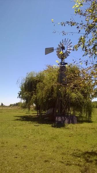 campo - pavon